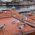 Meus vizinhos de telhado...