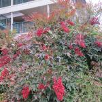 Colorful shrubbery on the hotel grounds