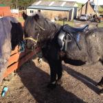 Smokey ready for her hack