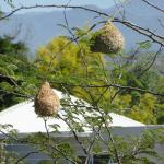 Bird Nests in the Garden