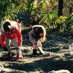 procurando fossil de dinossauro