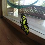 Mariposa en la sala