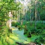 http://polandjustnow.com/sierakow-nature-reserve-izabelin.html