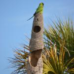 There were resident Parakeets and this is their home