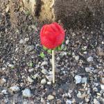 Strawberry on a stick on Valentine's day!