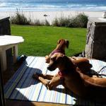 Dog Paradise Porch Style