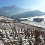Vignoble sous la neige