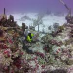 "Beautiful underwater ""gardens"" of coral"