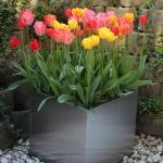 Tulip Inn Lausanne Beaulieu Foto