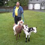 Ernie walks the goats most every day.