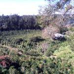 La vista dai bungalow