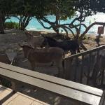 donkey parade on Scott Beach