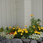 Unti 10 flowers
