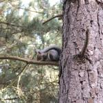 Foto de Weybourne Forest Lodges