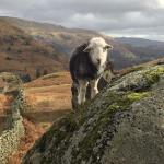An Herdy on the way down.