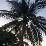 Photo de Blue Ocean Beach Resort