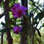 Foto de Phu Pha Nam Resort