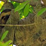 sloth on the way in...