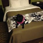 Mattie's first experience in a hotel!