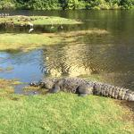 Croc on #11