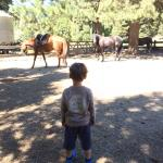 Scrutando i cavalli