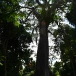 Parque Estadual da Vassununga