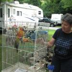 Camping Bird, Jack the Parrott