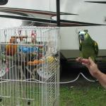 """Jack """"The Camping Bird"""" has company"""