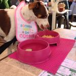 Doggie meal at the table