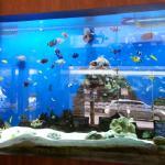 Reception aquarium