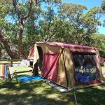 Lovely treed camp sites
