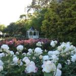 Dugald MacKenzie Rose Gardens