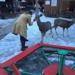 Even the deer are friendly...as long as you have food. :-)