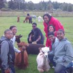 Sawdust Hill Alpaca Farm Foto