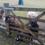 Feeding the goats :-)