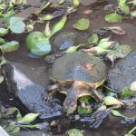 the turtles garden