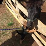 Lola's new friend