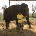 One of the lodge elephants with minder