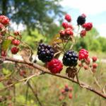 you may collect nuts and berries on State Park property