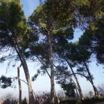 Parque del Seminario, Jaén