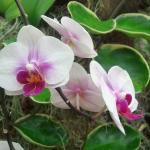 Orchid at Duke Farm Greenhouse