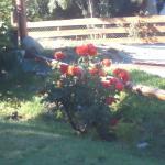 Jardín y rosales.
