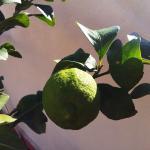 des fruits gorgés de soleil