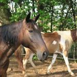 11 Pferde sind hier zu Hause