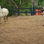 Natural Horsemanship in der Arena