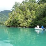 Beautiful Marlborough sounds- checking out the sting rays feeding