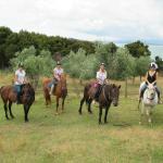 Waiheke Horse Tours Ltd