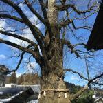 Kitamuki Kannon Shrine