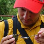 Diego reviving White-tipped Sicklebill with sugar water