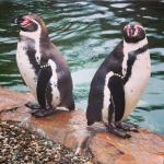 Penguins up close and personal